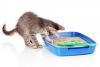 Le manque de propreté chez les chats