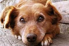 Anxiete du séparation du chien