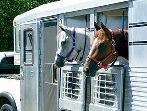 Stress du transport chez le cheval