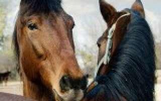 Fleurs de Bach pour les chevaux